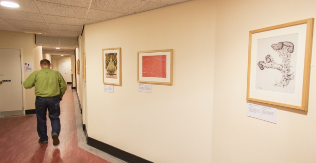 exhibition of microphotography in a corridor