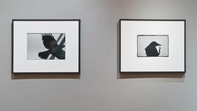 20160414-Ravens - Michael Hoppen Gallery-2679