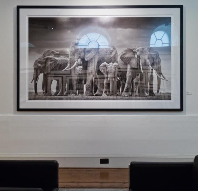 04-20160521-elephant photo-3136