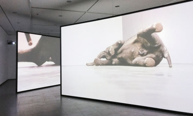 10-elephant video by Douglas Gordon